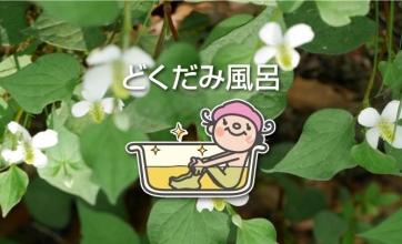 11/9(月)~11/15(日)はどくだみ風呂